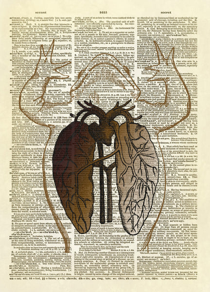 Frog Anatomy Diagram (Color Version) Dictionary Art Print