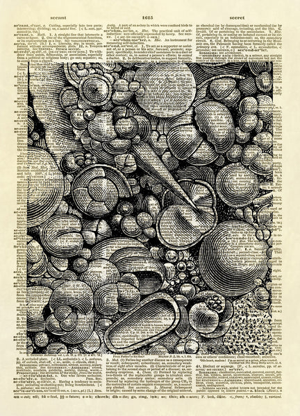 Ocean Ooze Seashells Dictionary Art Print