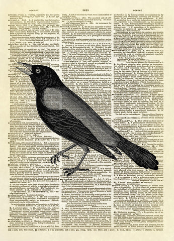 Rusty Crow Blackbird Animal Dictionary Art Print