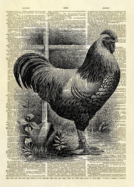 Beautiful Rooster Bird Dictionary Art Print