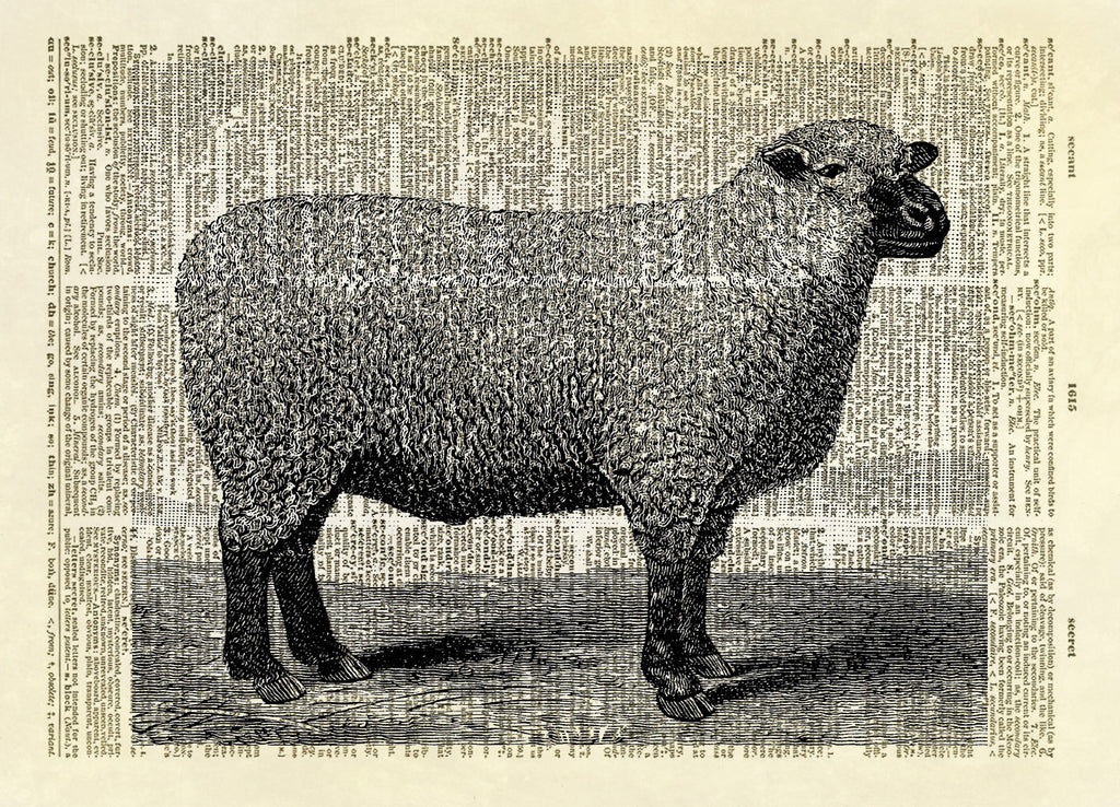 Sheep Farm Animal Dictionary Art Print