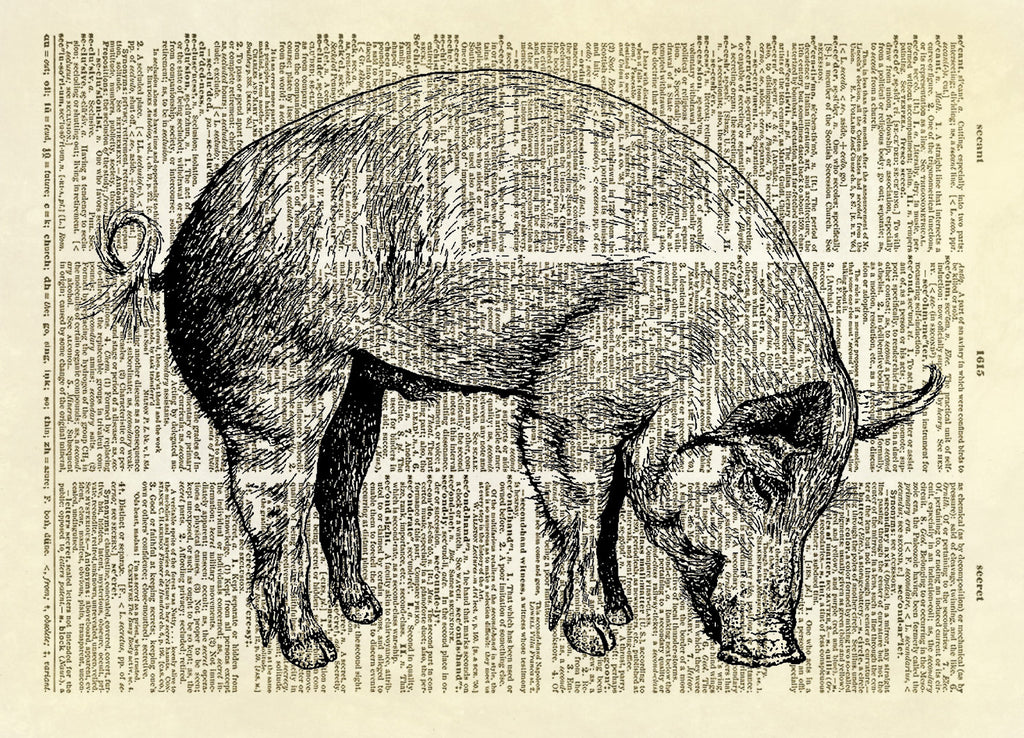 Curly Tail Pig Farm Animal Dictionary Art Print