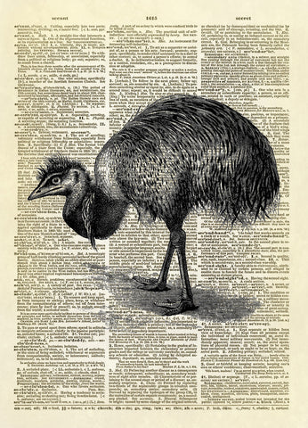 Australian Emu Bird Dictionary Art Print