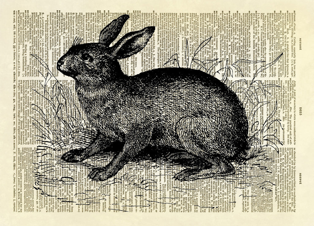 Rabbit Hare Animal Dictionary Art Print