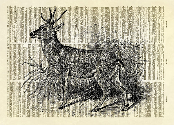 Gemul Deer Dictionary Art Print