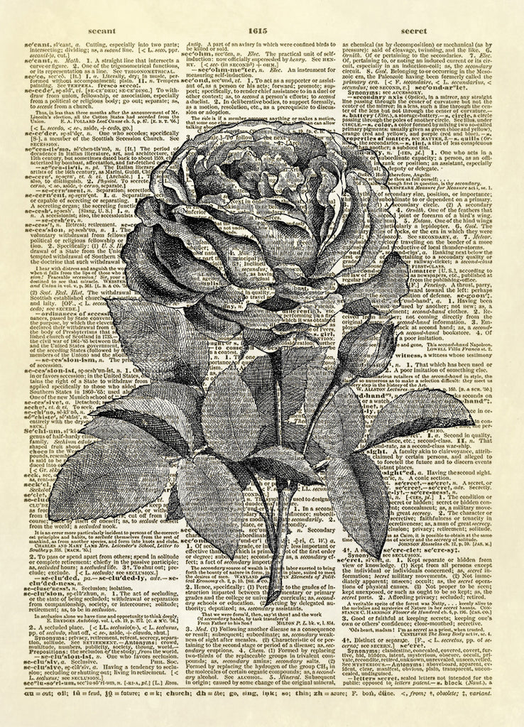 Blooming Rose Floral Dictionary Art Print