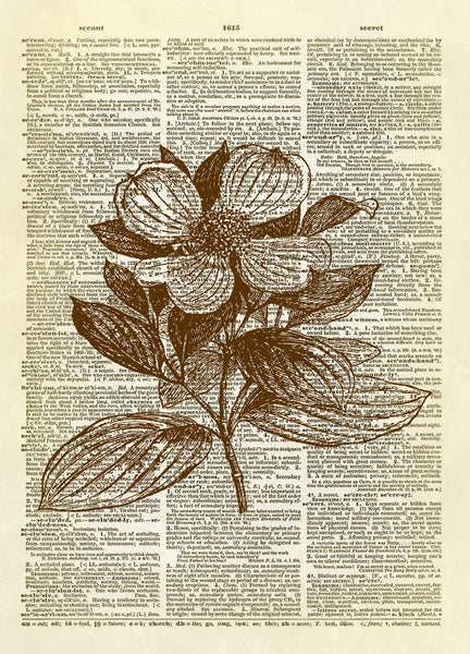 Dogwood Flower Dictionary Art Print