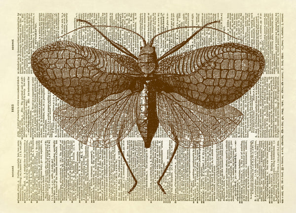 Large Moth Insect Dictionary Art Print