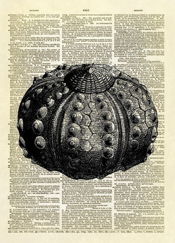 Sea Urchin Art Dictionary Art Print