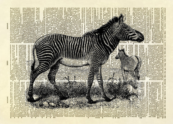 Two Zebras African Animal Dictionary Art Print