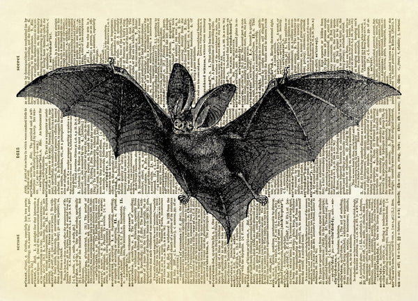 Flying Bat Animal with Wings Halloween Dictionary Art Print