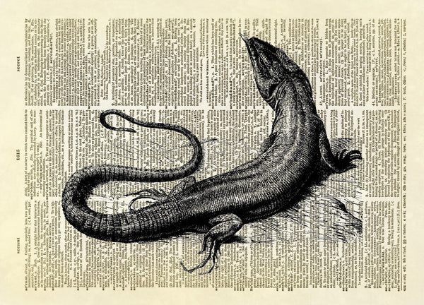 Komodo Dragon Lizard Dictionary Art Print