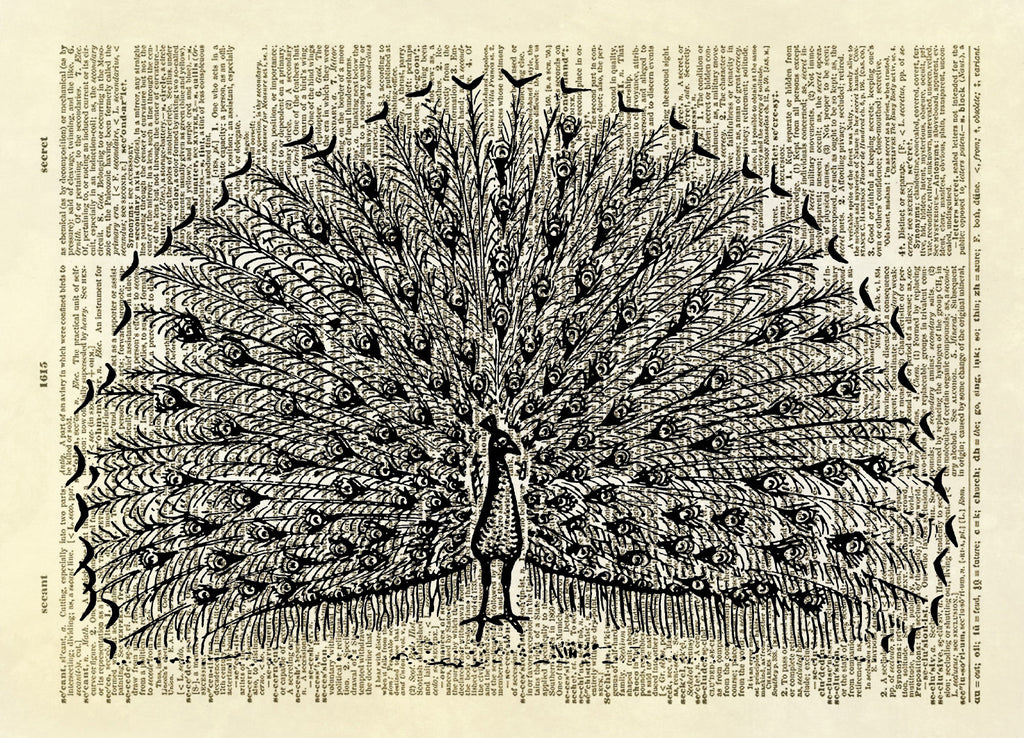 Peacock Bird with Feathers Spread Dictionary Art Print