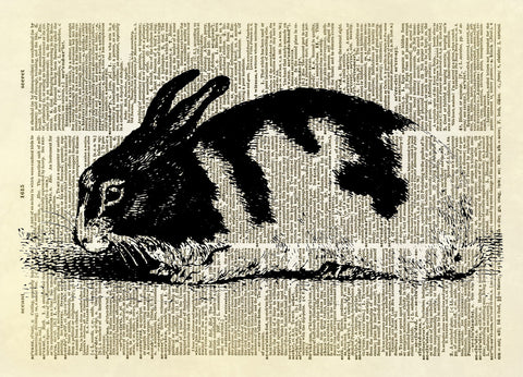 Black and White Bunny Rabbit Dictionary Art Print