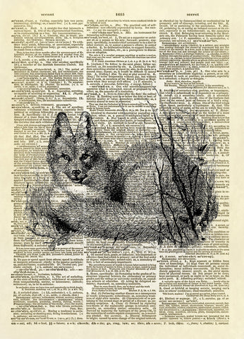 American Red Fox Dictionary Art Print