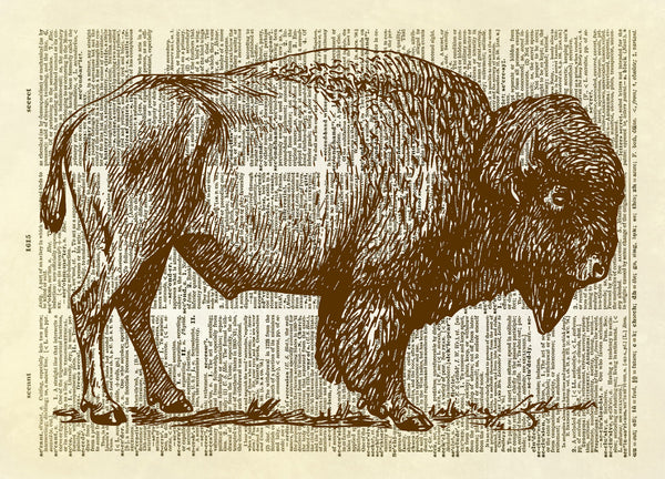 Buffalo Profile Dictionary Art Print