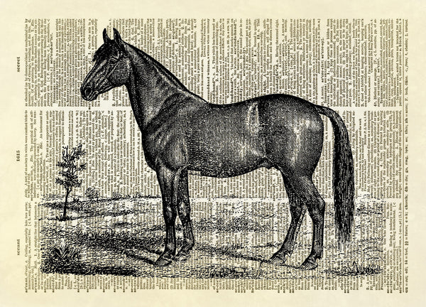 Horse Farm Animal Dictionary Art Print