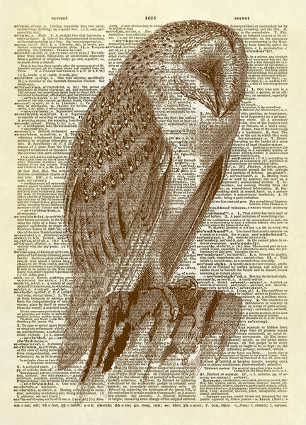 Screech Owl Art Dictionary Art Print