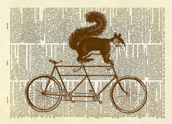 Squirrel on a Bicycle Built for Two Dictionary Art Print