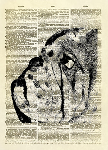 Bulldog Face Dog Animal Dictionary Art Print