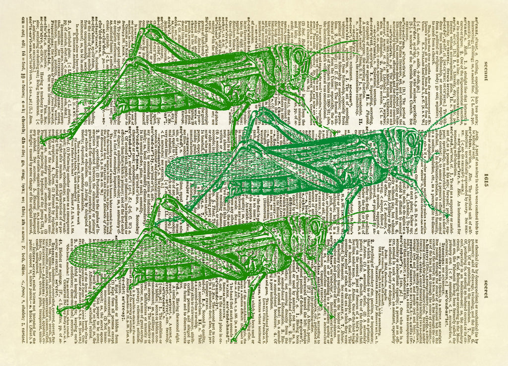 Grasshopper Insect Trio Dictionary Art Print