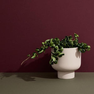 Fergus Planter | Medium