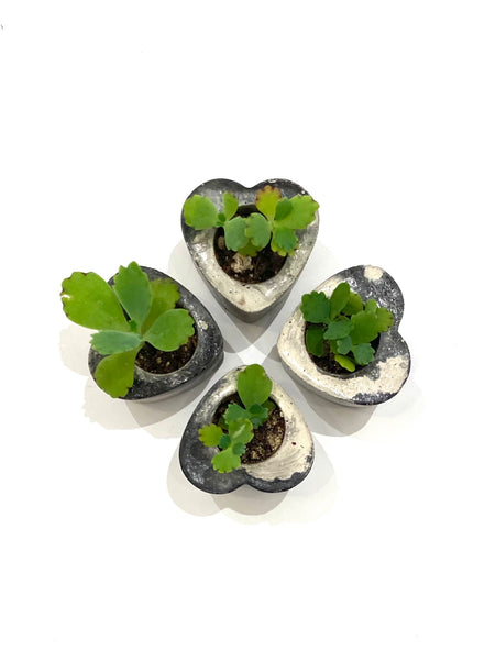 DEKOKRETE - Mini Heart Planter