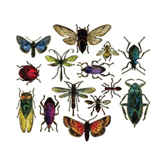 Sizzix - Framelits Dies By Tim Holtz - Entomology