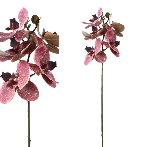 Orchid burgundy