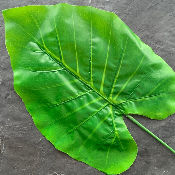 Delicious Monster Leaf