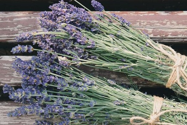 Our 8 Top Reasons to Love Lavender