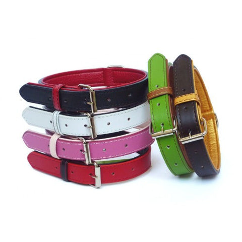 The Paws Colour Fusion Collars (XLarge)
