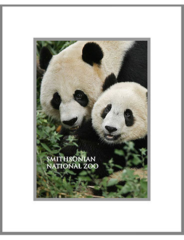 "8""x 10"" National Zoo Matted Print"