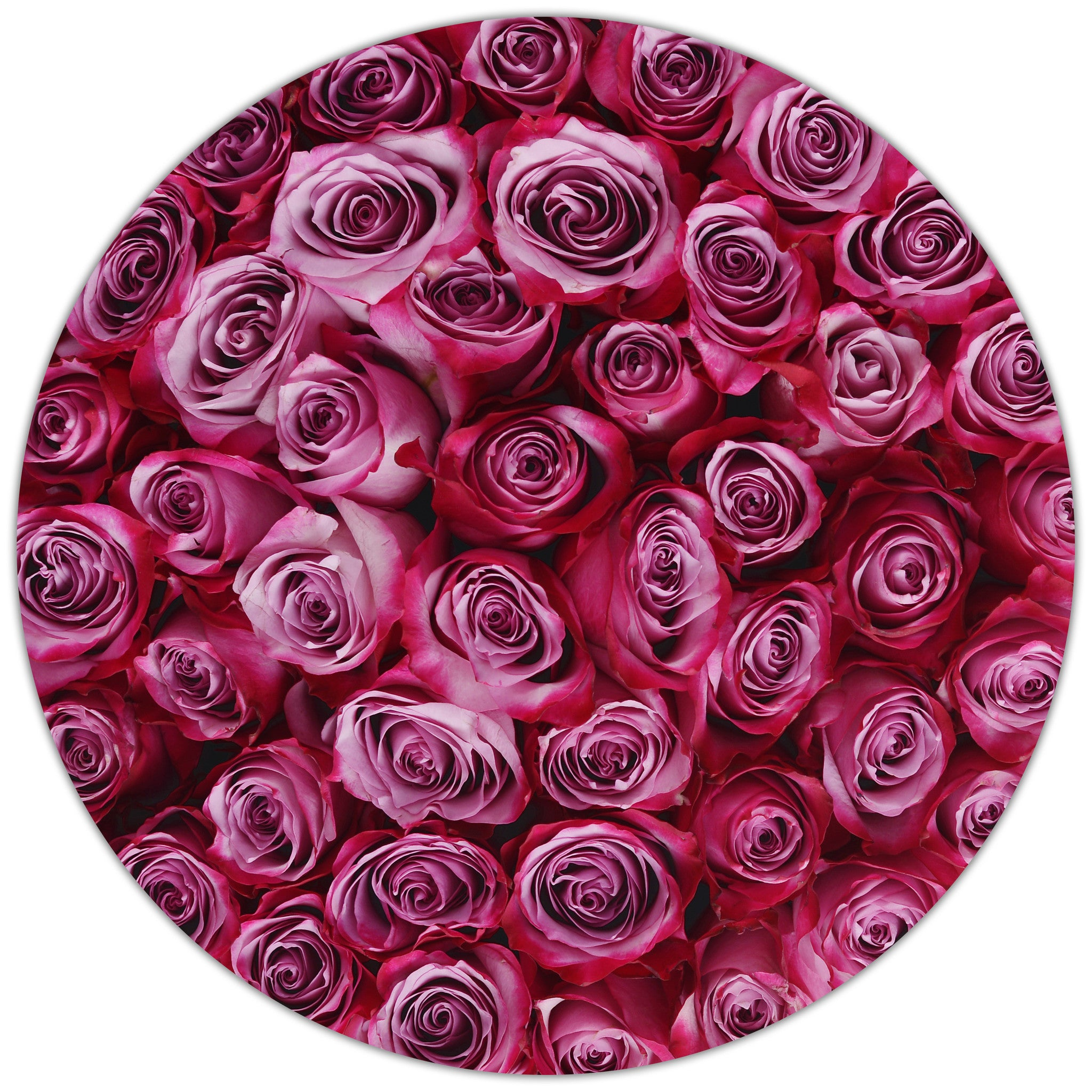Medium - Deep Purple Roses - Grey Box - The Million Roses Budapest