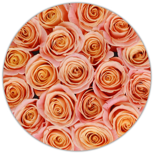 Small - Peach Roses - White Box - The Million Roses Budapest
