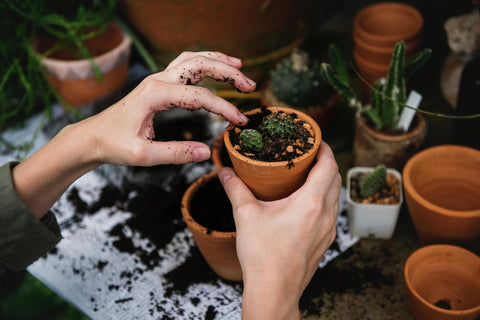 Two hands are in frame, planting a succulent in a small terracotta pot. There is some extra dirt and soil, as well as other potted cacti, in the background.