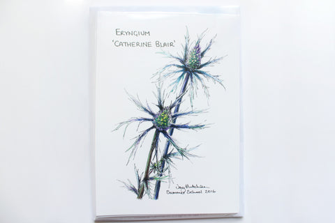Eryngium 'Catherine Blair' Greeting Card (A6)