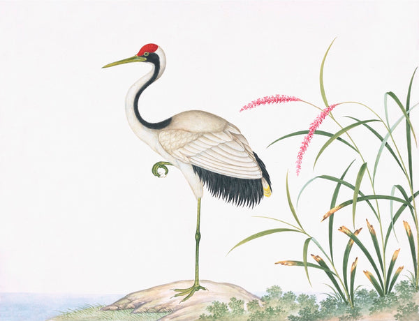 Ornis Gallery Chinese Birds Print 3711