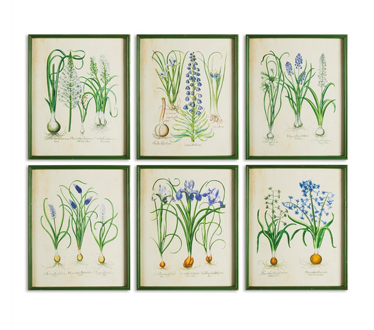 spring bulbs framed print, assorted