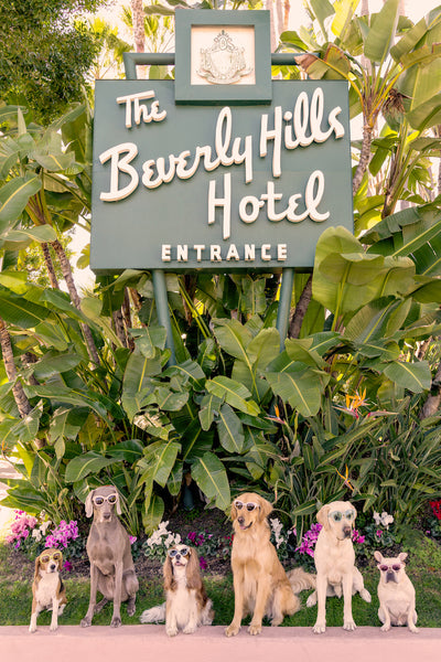 "Gray Malin Dogs at The Beverly Hills Hotel Vertical, 11.5"" x 17"""