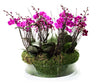 Jungle of Purple Orchids Planter