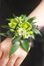 Mixed Green Wristlet Corsage
