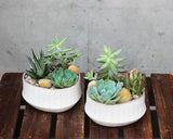 Succulent Duo Indoor Planted Container