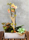 Autumn Sunshine Orchid Planted Container