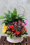 Colorful Garden Indoor Planted Container