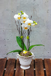 Bright and Happy Orchid Plant