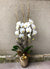 Luxurious Winter White Orchid Planted Contianer