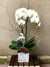 Winter White Orchid Planter