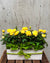 Box of Sunshine Indoor Planter