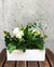 A Touch of White Indoor Planted Container